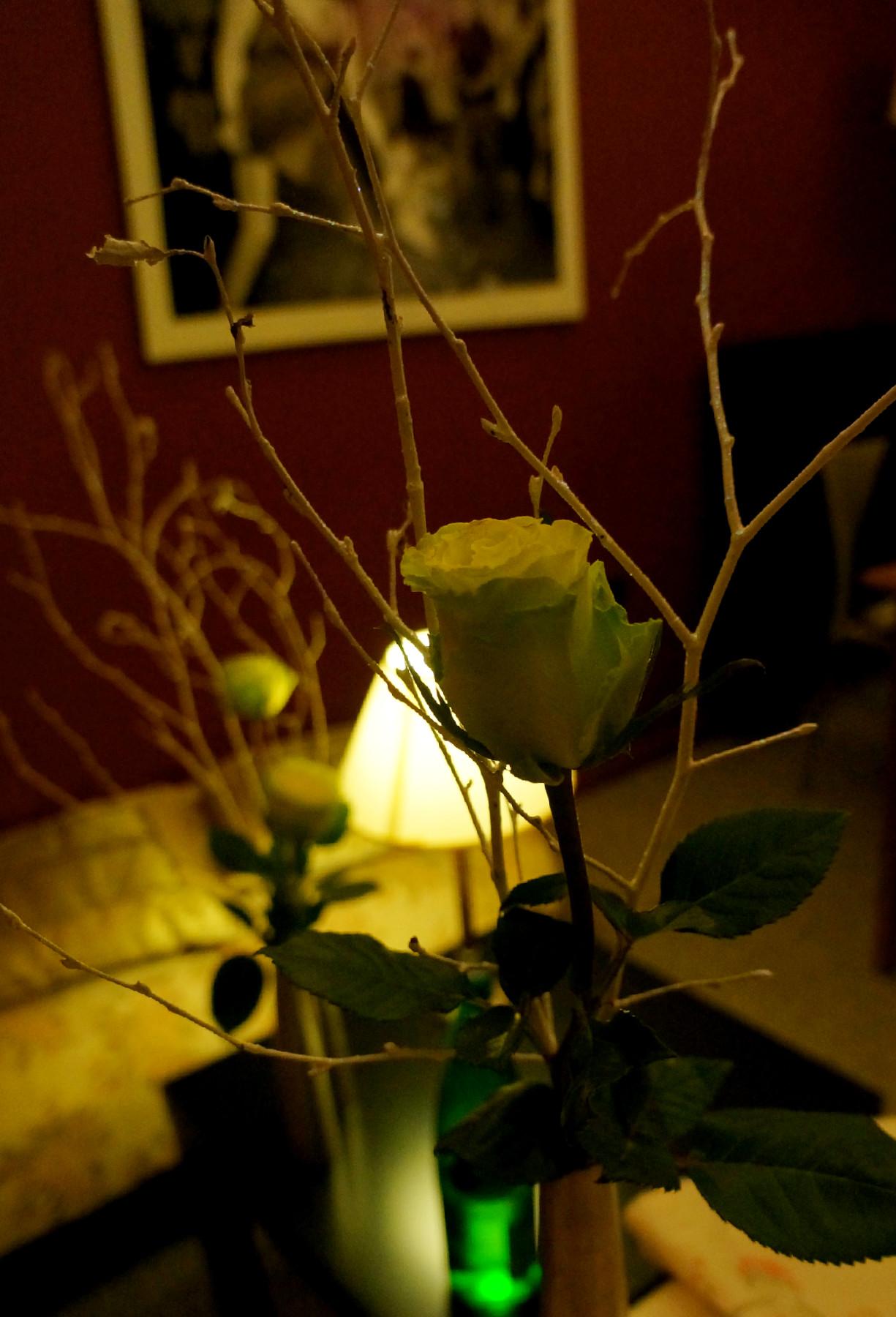 bela ruža na stolu